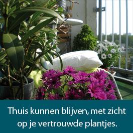 dia-3-plantjes
